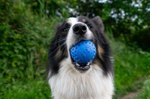 KiwiWalker Let's play! BALL MAXI blue (7cm)