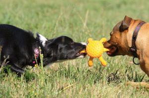 KiwiWalker Let's play! OCTOPUS MAXI orange (20cm)
