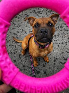 KiwiWalker Let's play! RING MINI pink (13cm)